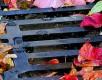 Foto: 76265, bit Quelle: Photocase.com