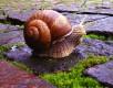 Foto: 74007, jlokij Quelle: Photocase.com